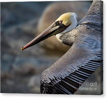 Canvas Print featuring the photograph Coming Through by Dale Nelson