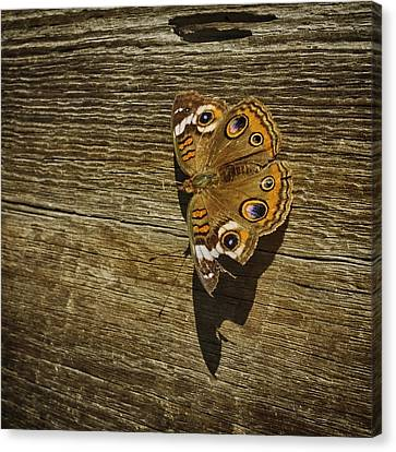 Common Buckeye With Torn Wing Canvas Print by Lynn Palmer
