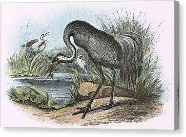 Common Crane Canvas Print by English School