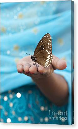 Common Crow Butterfly Canvas Print by Tim Gainey