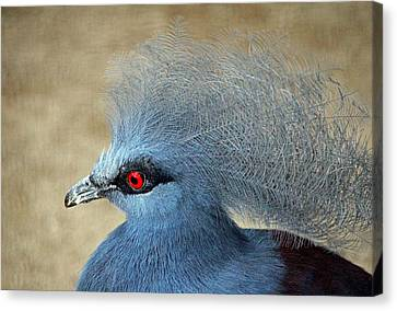 Common Crowned Pigeon Canvas Print by Cynthia Guinn