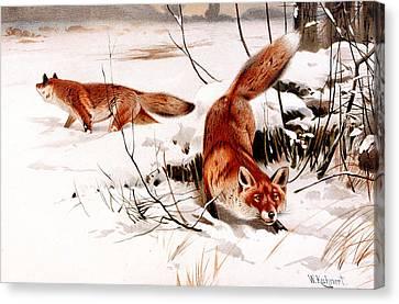 Common Fox In The Snow Canvas Print by Friedrich Wilhelm Kuhnert