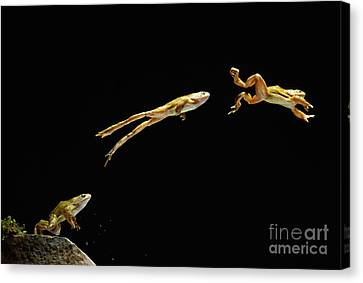 Highspeed Canvas Print - Common Frog Leaping by Stephen Dalton