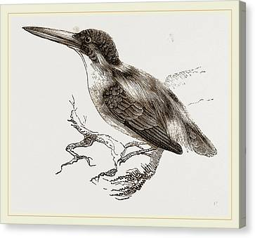 Common Kingfisher Canvas Print by Litz Collection