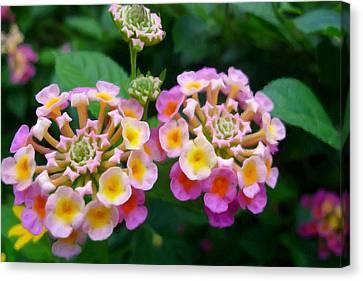 Common Lantana Flower Canvas Print by Lanjee Chee
