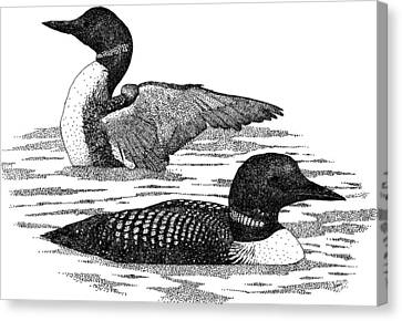 Common Loons Canvas Print