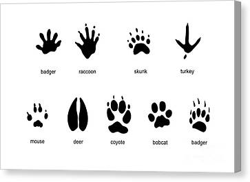 Common Mammal Animal Tracks Canvas Print by Carlyn Iverson