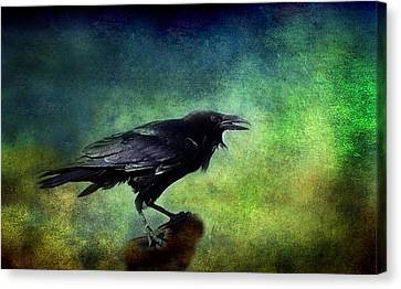 Common Raven Canvas Print by Barbara Manis
