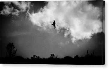 Common Raven Black And White Canvas Print by Carl Moore