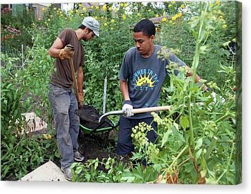 Community Garden Volunteers Canvas Print by Jim West