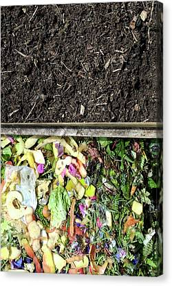 Compost Heap Canvas Print by David Aubrey