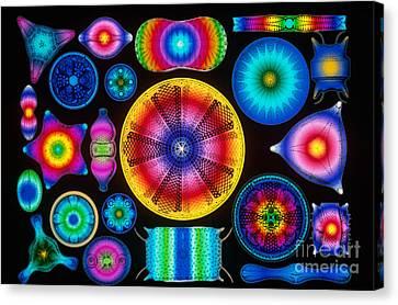 Computer Enhanced Diatoms Canvas Print by Scott Camazine