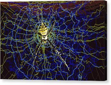 Computer Simulation Of A Spider Canvas Print by Heidi & Hans-Juergen Koch