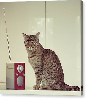 Concentrated Listener Canvas Print