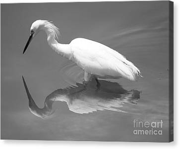 Concentration Canvas Print by Carol Groenen