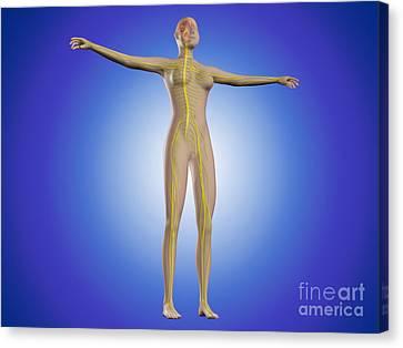 Conceptual Image Of Female Nervous Canvas Print by Stocktrek Images