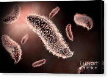 Conceptual Image Of Paramecium Canvas Print by Stocktrek Images