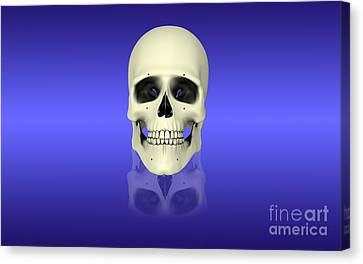 Conceptual View Of Human Skull Canvas Print by Stocktrek Images