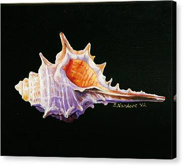 Canvas Print featuring the painting Conch Shell by Sandra Nardone