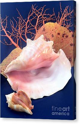 Conch Still Life Canvas Print