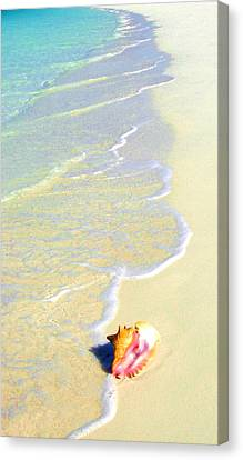 Conch Canvas Print by Victor Minca