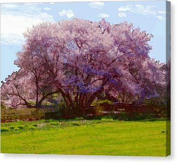 Concord Spring Canvas Print by John Feiser