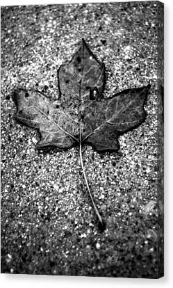 Concrete Leaf Canvas Print