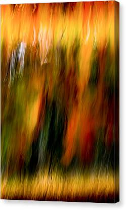 Condiments Canvas Print by Darryl Dalton