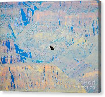 Condor Series H Canvas Print