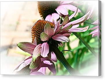 Cone Flower 6 Canvas Print
