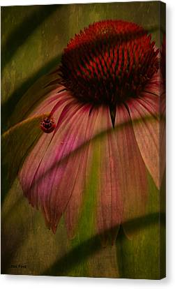 Cone Flower And The Ladybug Canvas Print by Lesa Fine