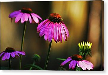 Canvas Print featuring the photograph Cone Flower Shines... by Al Fritz