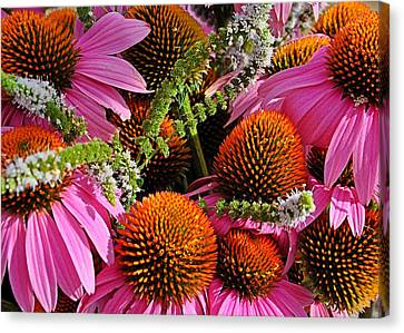 Cone Flowers And Mint Canvas Print