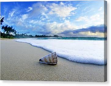 At Sea Canvas Print - Cone Foam by Sean Davey