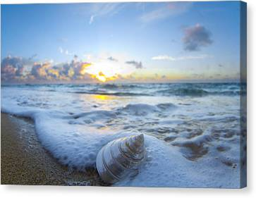 Cone Shell Foam Canvas Print by Sean Davey