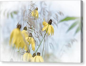 Coneflower And Bee 1  Canvas Print by Susan  McMenamin