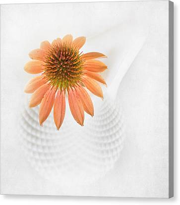 Coneflower And Milkglass Canvas Print by David and Carol Kelly