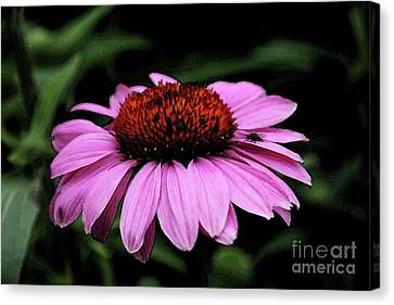 Coneflower With Bug Canvas Print by Christiane Schulze Art And Photography