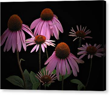 Coneflowers Canvas Print by Judy  Johnson