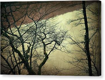Confession Of The Woods II Canvas Print by Taylan Apukovska