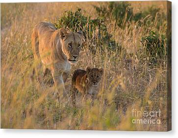 Confidence And Comfort Canvas Print by Ashley Vincent