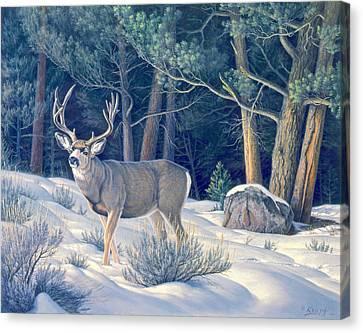 Mule Deer Canvas Print - Confrontation - Mule Deer Buck by Paul Krapf