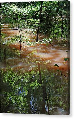 Congaree Swamp In Flood Conditions Canvas Print