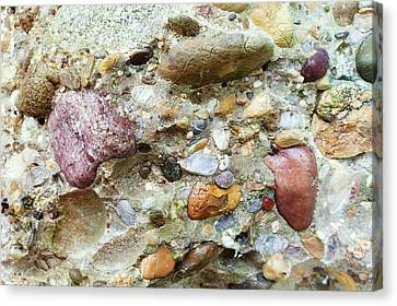 Conglomerate Rock Canvas Print by Dr Juerg Alean