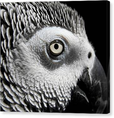 Congo African Grey 2 Canvas Print by Paulina Szajek