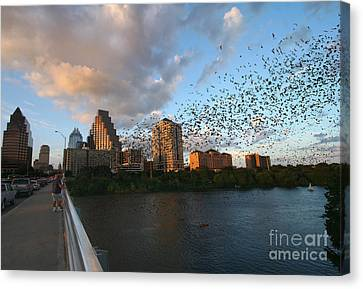 Congress Avenue Bats Canvas Print by Randy Smith