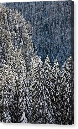 Conifer Forest In Fresh Snow In Kiental Canvas Print by Martin Zwick