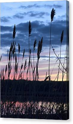 Connecticut Sunset With Reeds Series 4 Canvas Print
