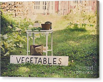 Connecticut Vegetable Stand Canvas Print by Diane Diederich