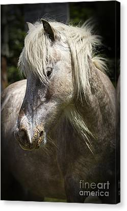 Canvas Print featuring the photograph Consideration by Carrie Cranwill
